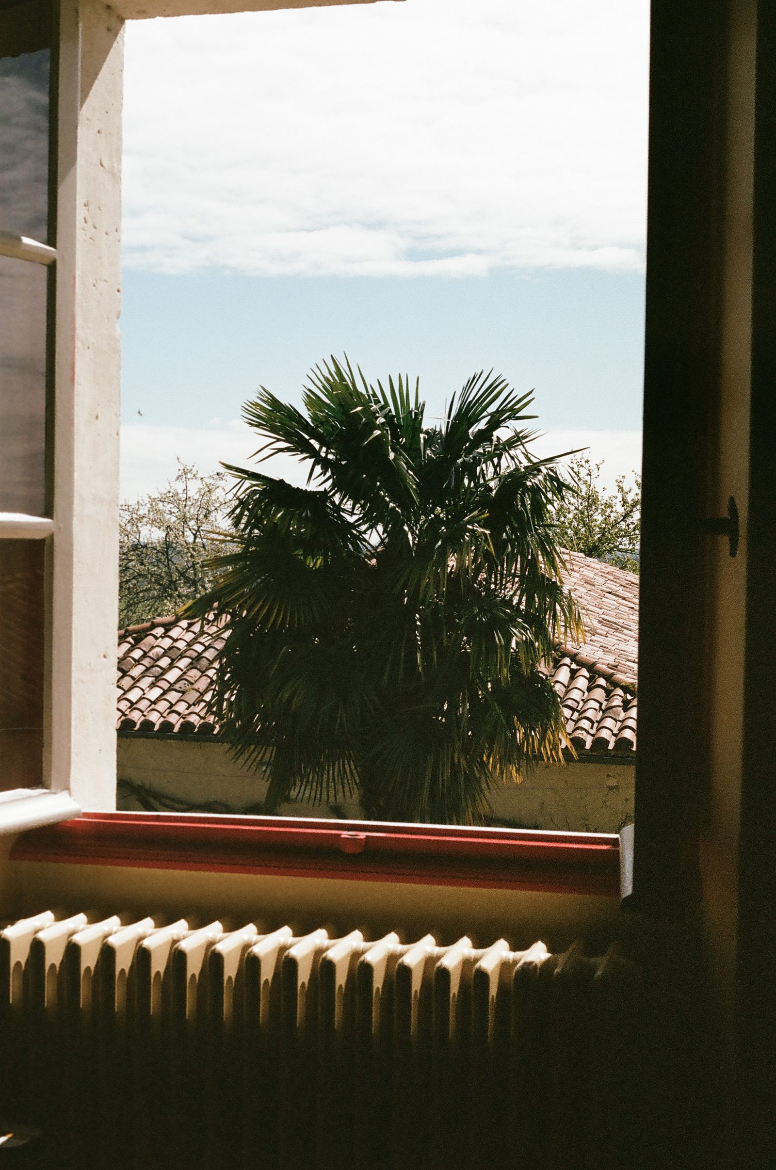 Palm and window