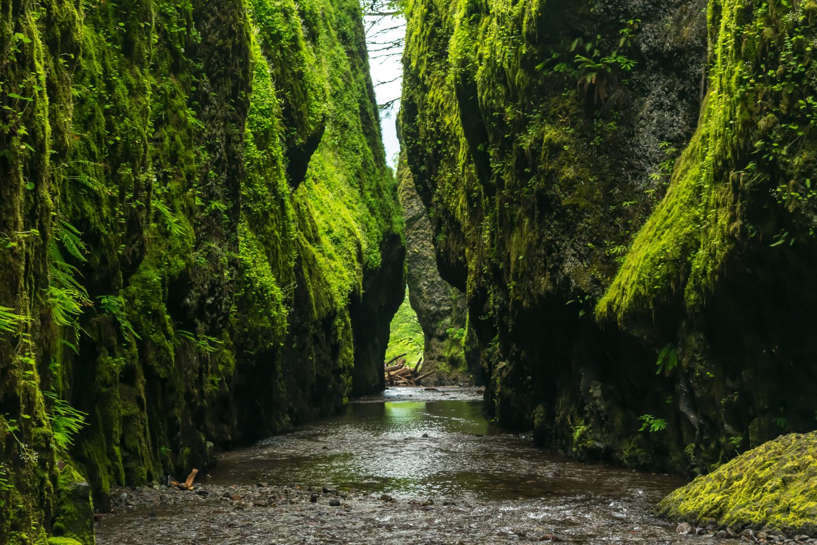 Natural Green Wall