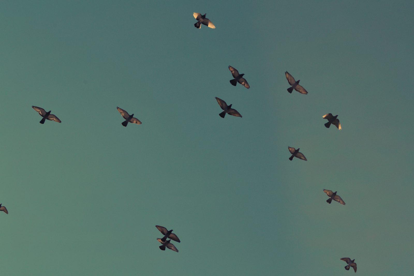 Birds Squad