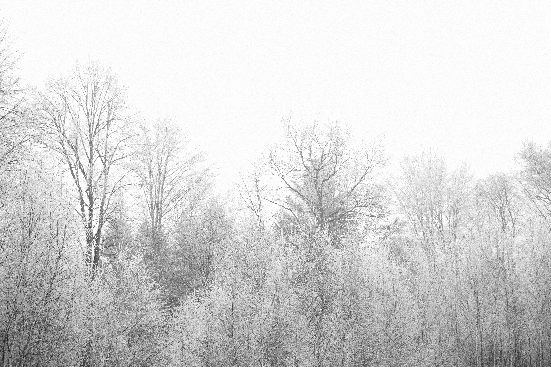 Frozen trees life of pix