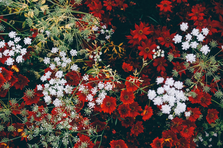 flowers mixture life of pix