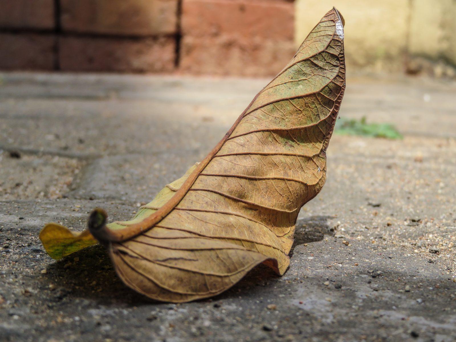 Fallen Leaf Details