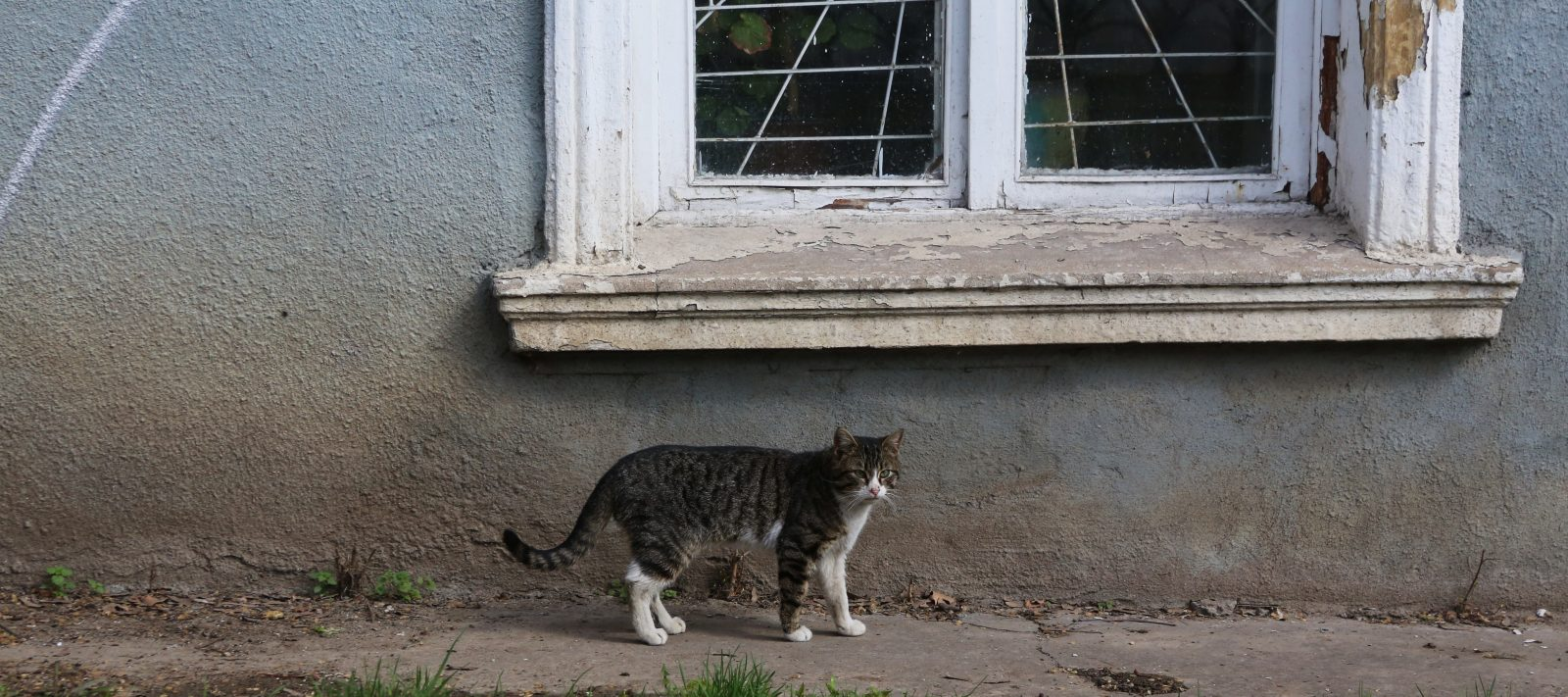 Cat of the Ukraine