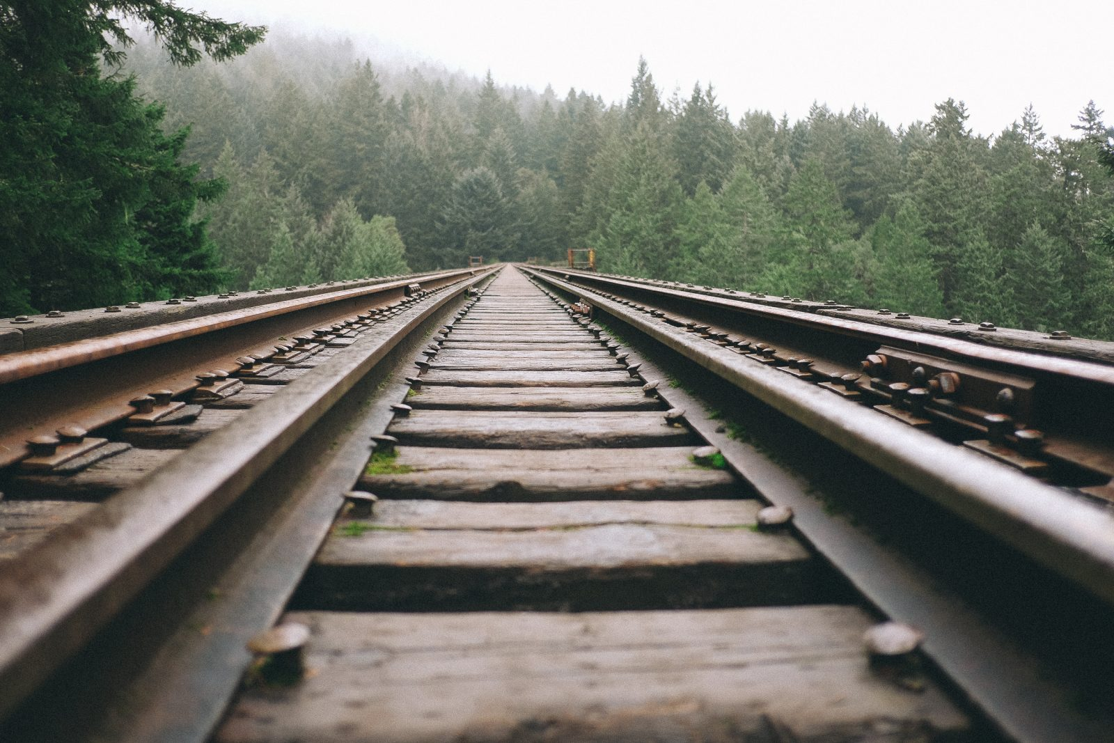 Rails across the Forest