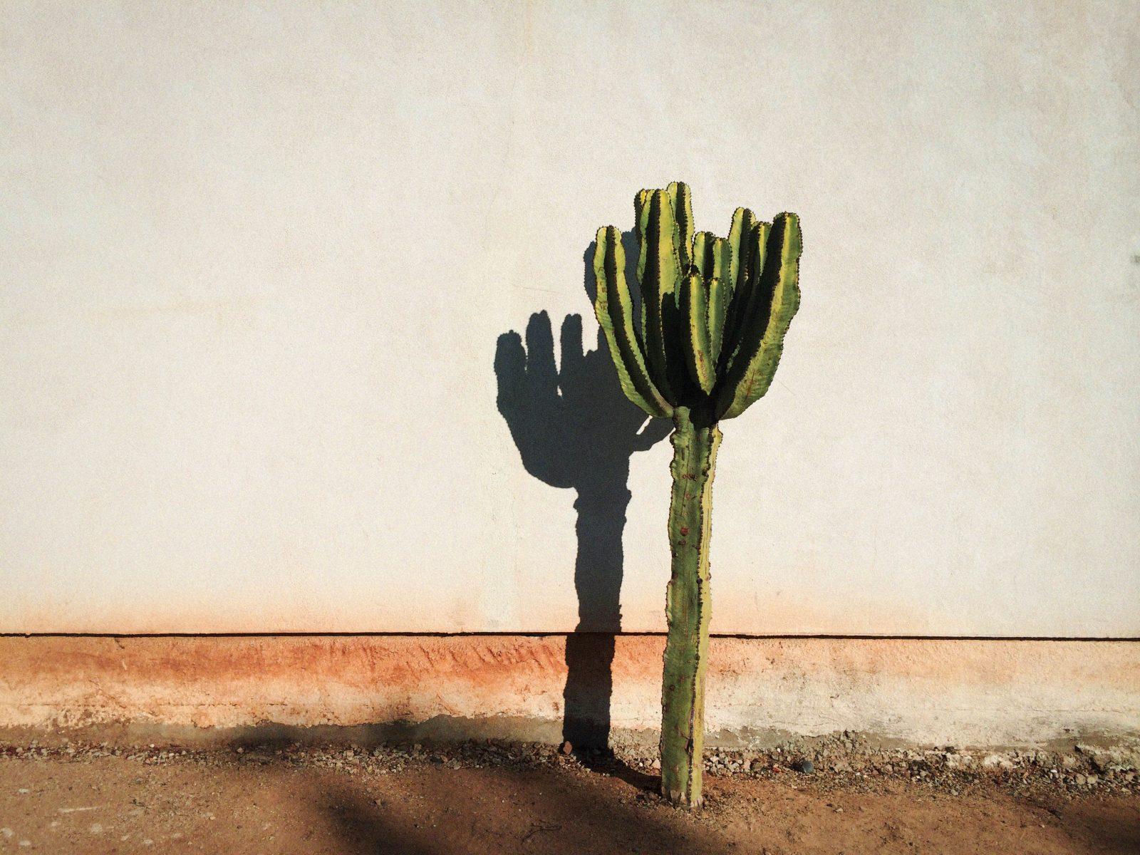 Lonely Cactus