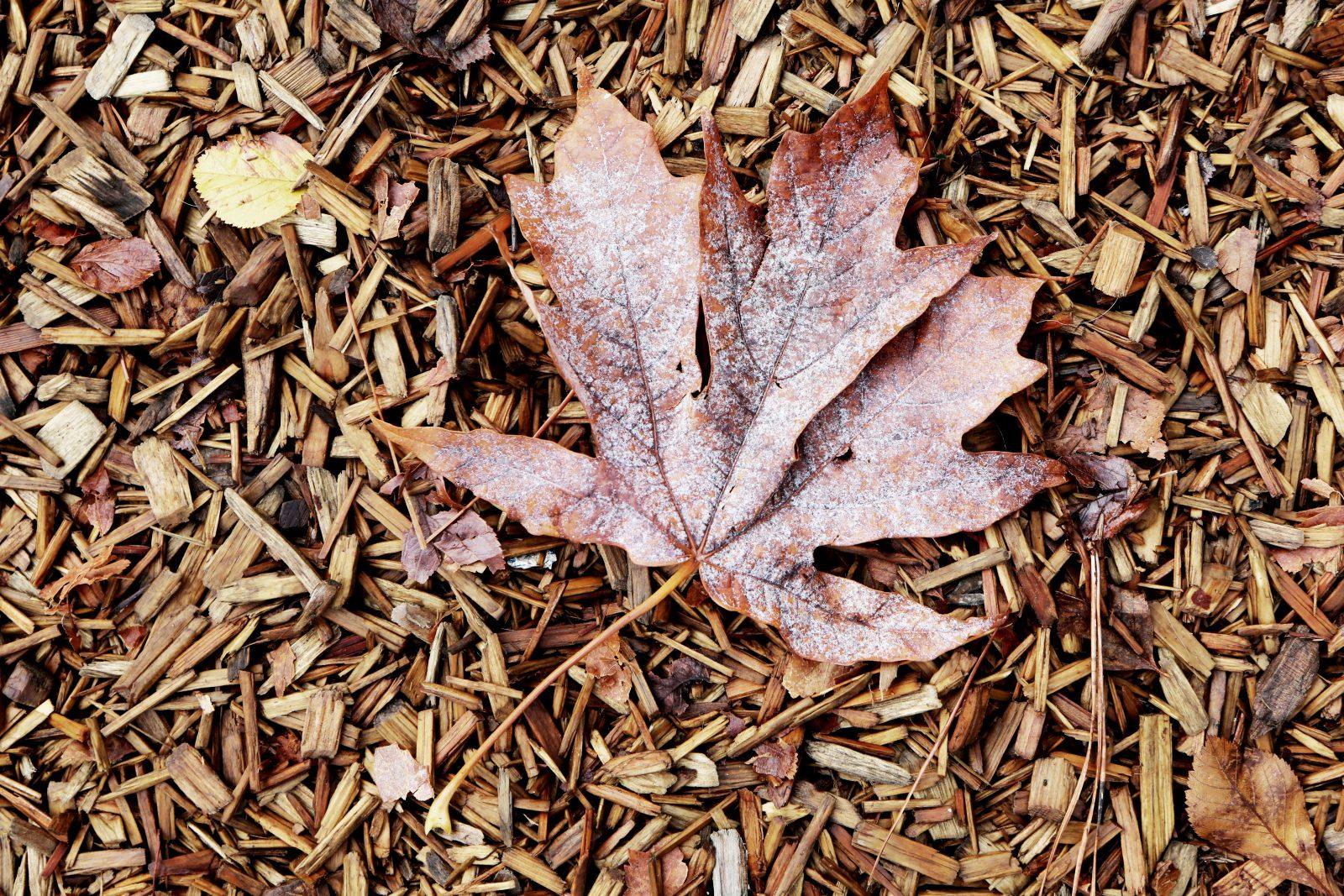 Leaf On Wood Carpet