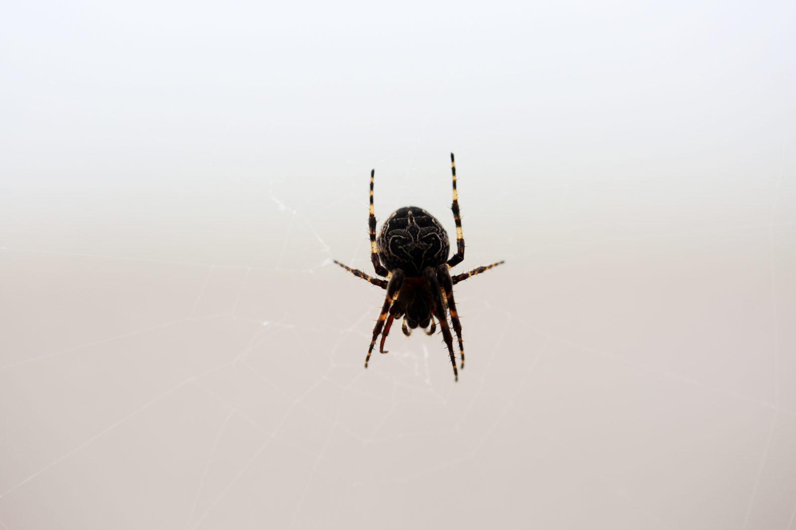 Spider Spins A Web