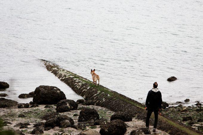 Man & Dog At The Beach