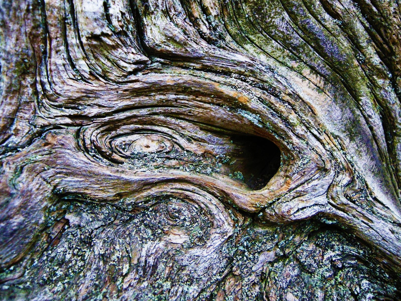 Wood knot