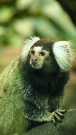 Playful Monkey