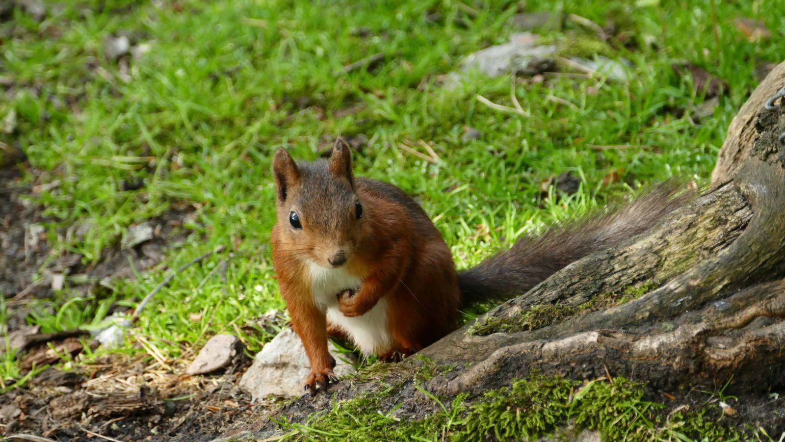 Disney Squirrel