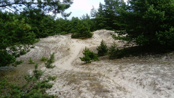 Sand In Forest