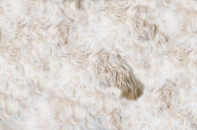 Dog pelt pattern