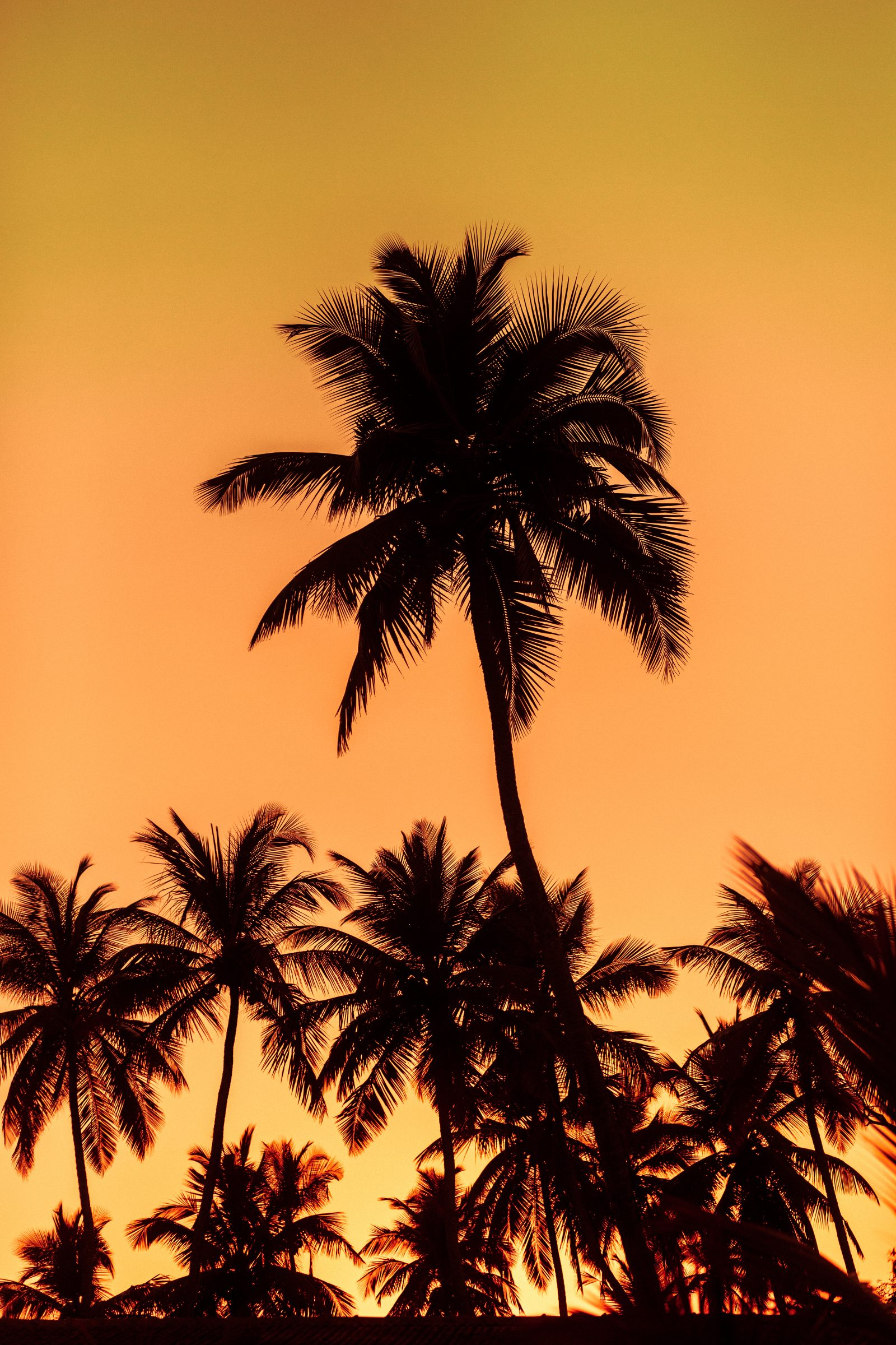 Sunset on the palms