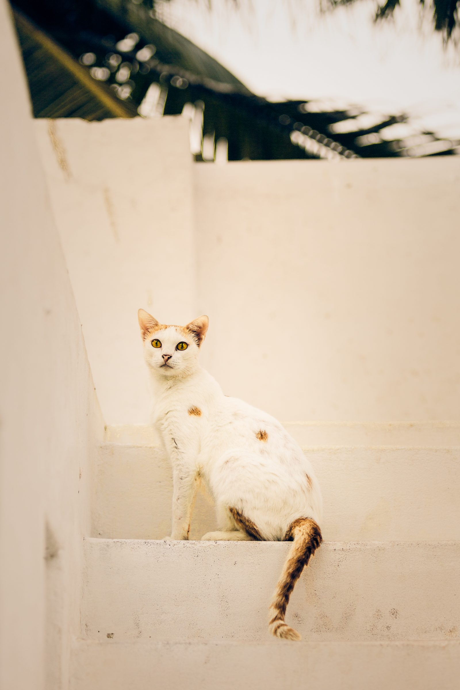 Cat in Staircase