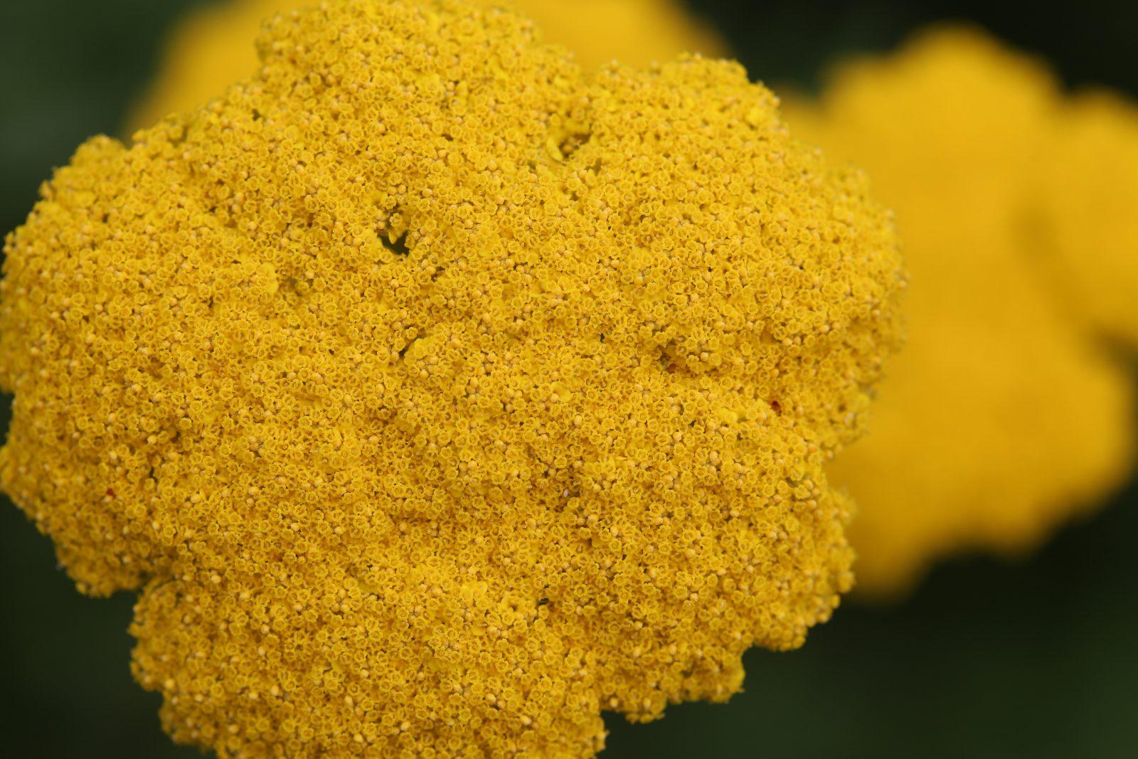 Yellow flowers free stock photos life of pix yellow flowers izmirmasajfo