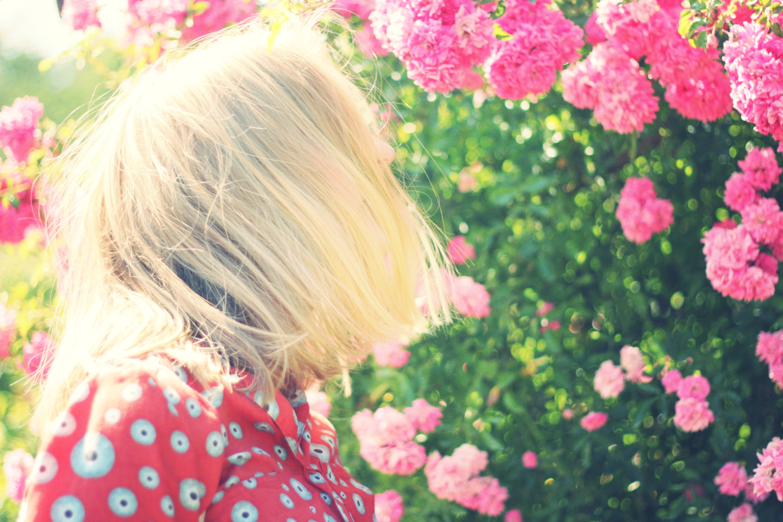 Pink Flowers Free Stock Photos Life Of Pix