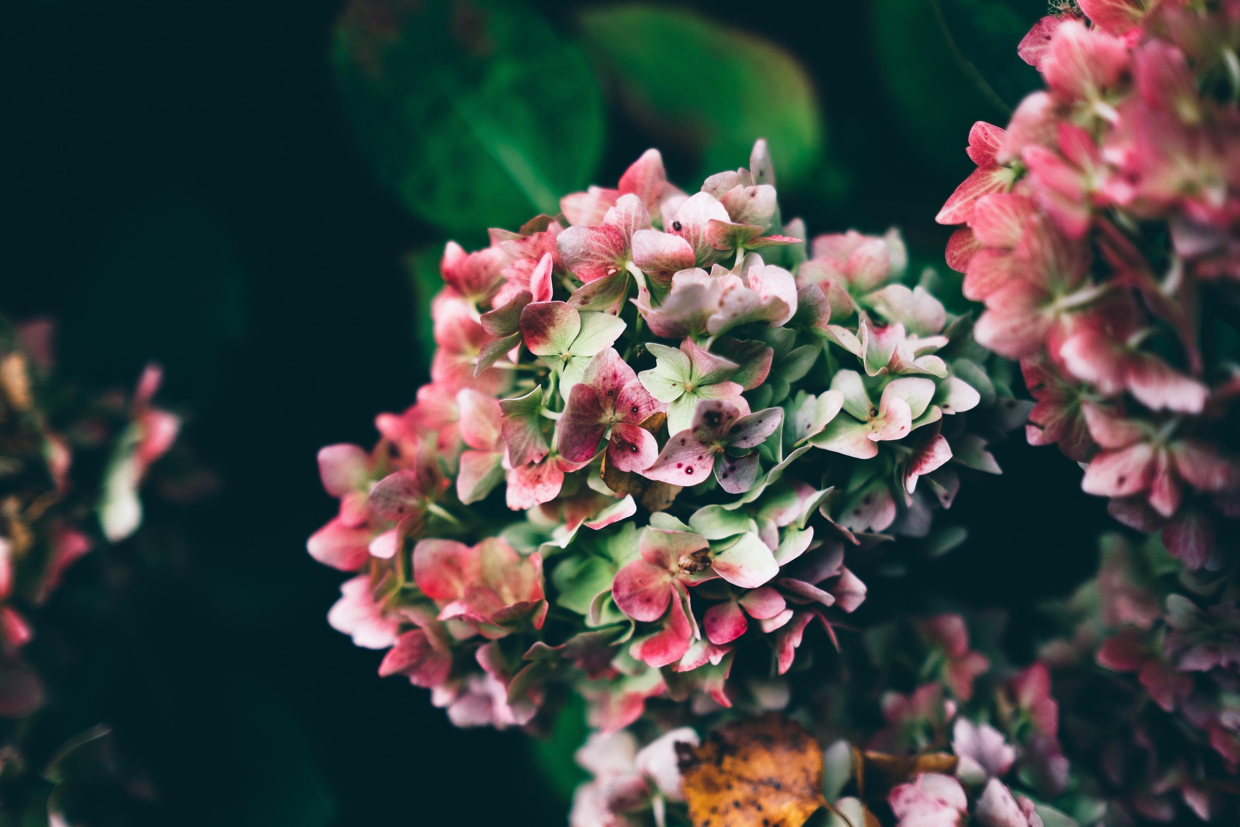 Growing flowers free stock photos life of pix for Un bouquet de roses