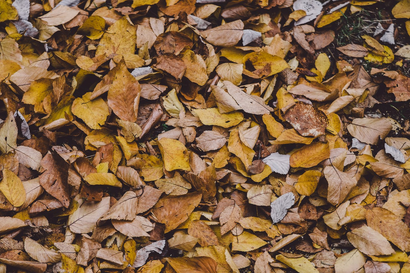 Fallen Leaves Free Stock Life Pix