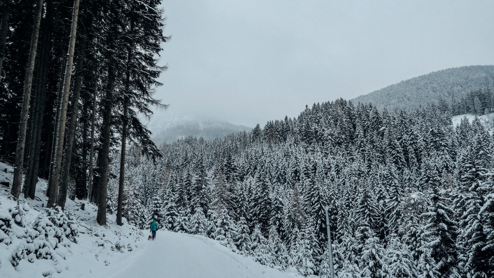 Snowy Forest Free Stock Photos Life Of Pix