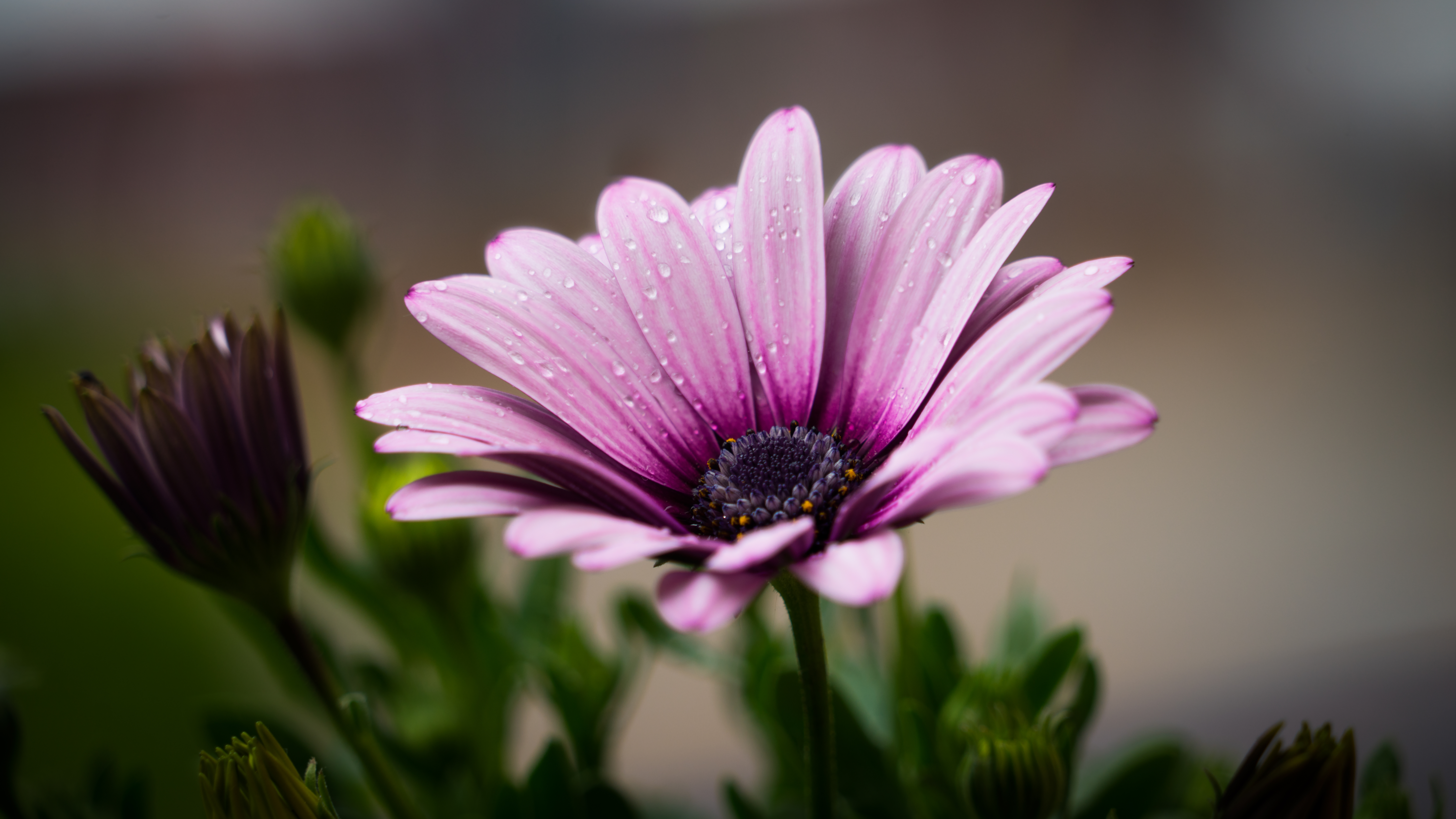 Beautiful Flower Free Stock Photos Life Of Pix