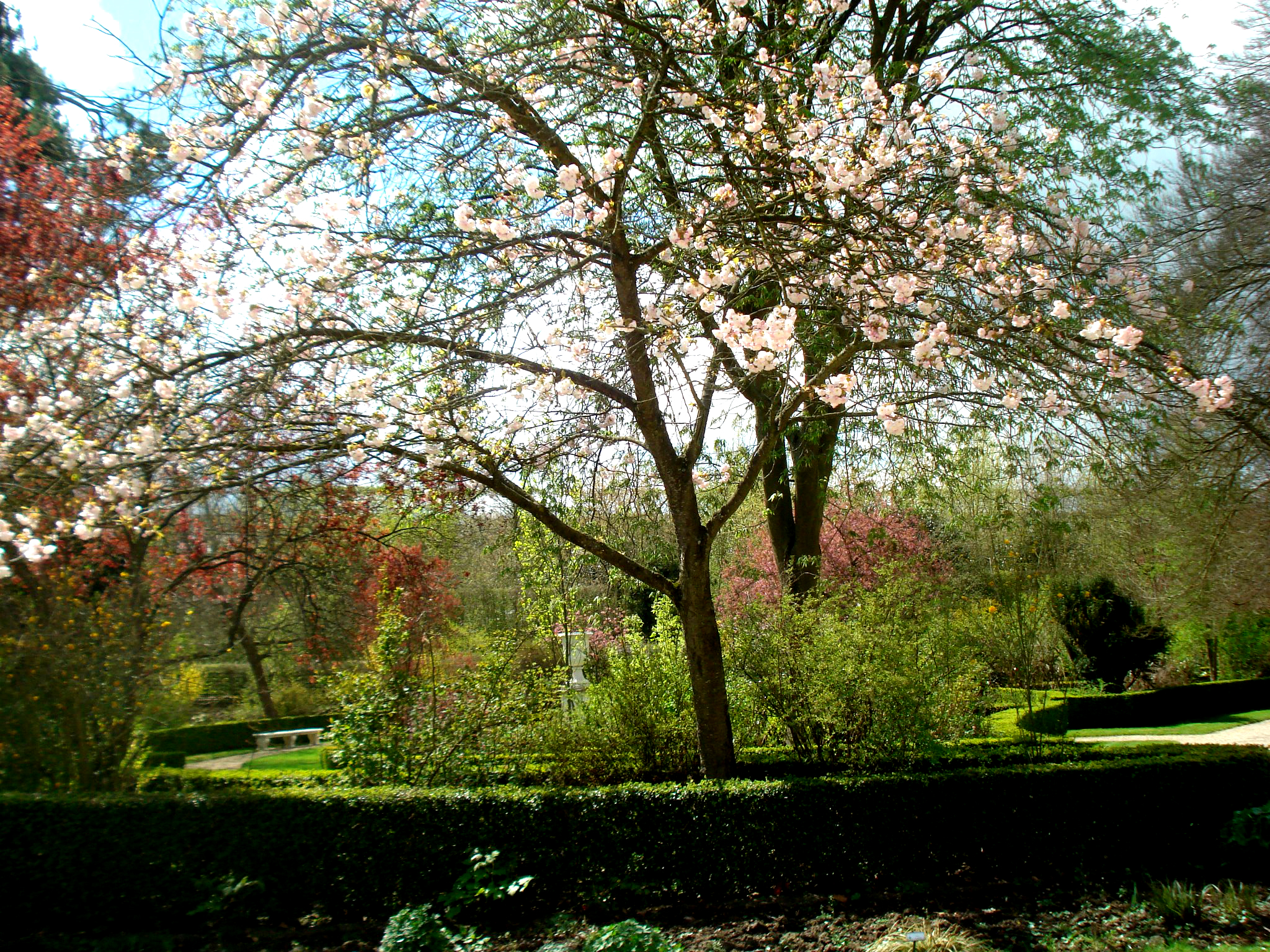 Jardin du roi free stock photos life of pix for Le jardin high wine