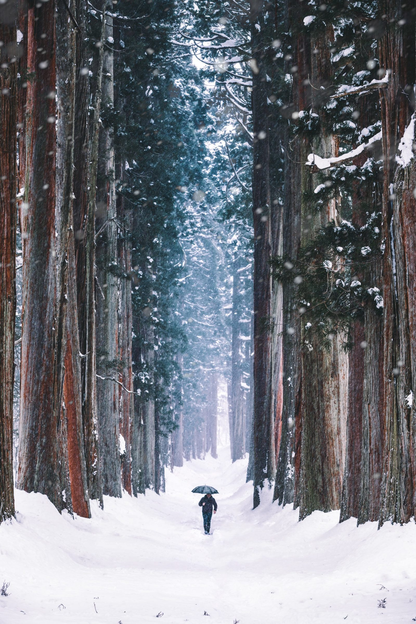 Japanese Winter Forest Free Stock Photos Life Of Pix