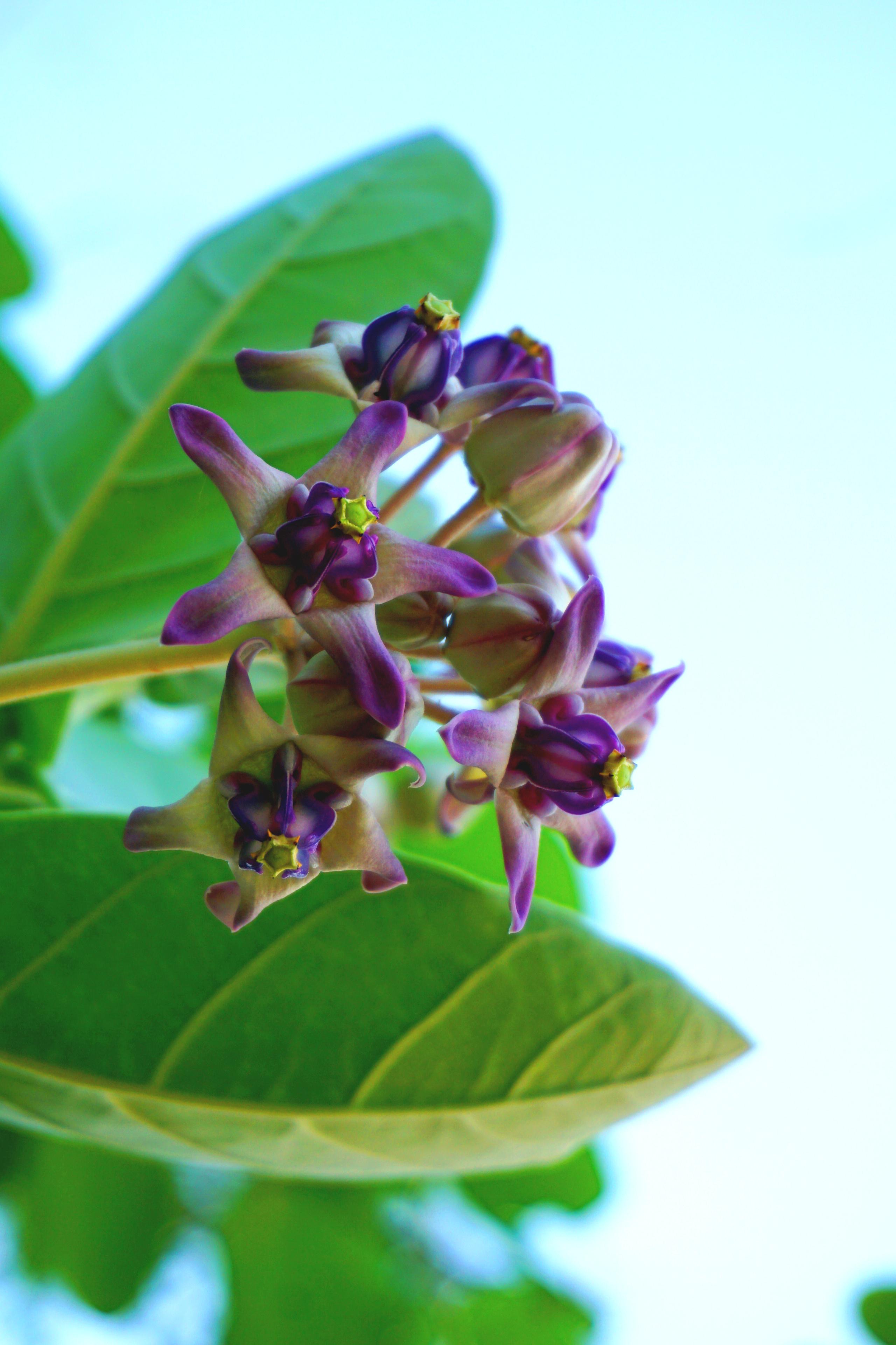 love flower in thailand